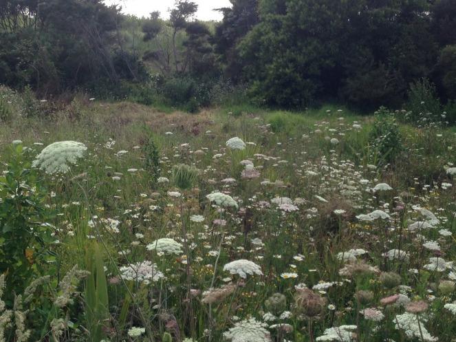 Meadownlands