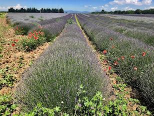 Provence8
